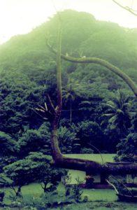 A green hillside in Vanuatu, 1997