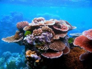 Healthy Corals in the Great Barrier Reef, 2010 (Image by Toby Hudson, Creative Commons)
