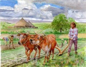 Iron Age Farming