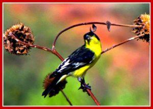 Arizona Yellow Songbird