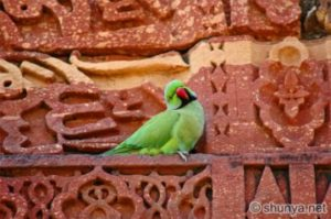 A parrot sitting on an outbuilding at the Qutb Minar in Delhi in 2004.