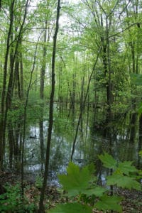Pinehurst Lake Wetland