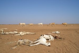 Kenya: Drought leaves dead and dying animals in northern Kenya