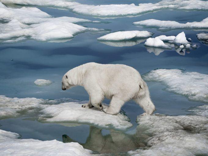 Loss of Arctic Sea Ice